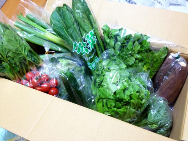 九州産新鮮野菜パック【九州の空】